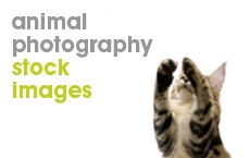 Animal-Photography